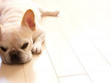 床の滑り防止コーティング